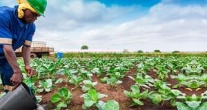 Horticulture Kenya