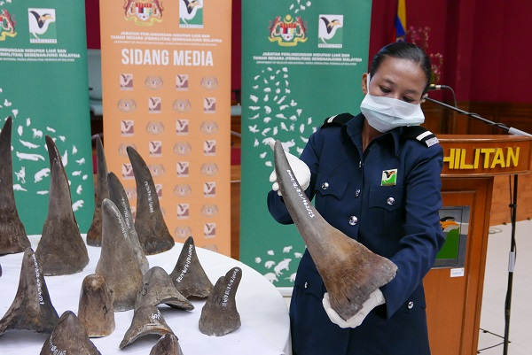 rhino horn seizure
