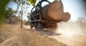 Timber Trade