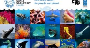 World Wildlife Day 2019