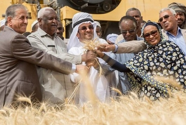 Sudanese farmers  Scaling up of heat-tolerant wheat transforms food production, policy in Sudan Sudanese farmers celebrating the success of new heat resistant wheat varieties 1000x674