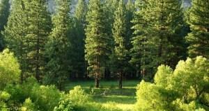 Northern Hemisphere vegetation