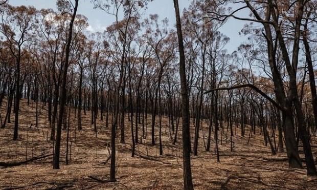 Australia bushfires  School strikers call for climate vigils in solidarity with Australian bushfires mail 3