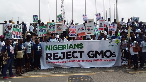 Why govt should ban GMOs, revoke biosafety agency law, by campaigners GMO