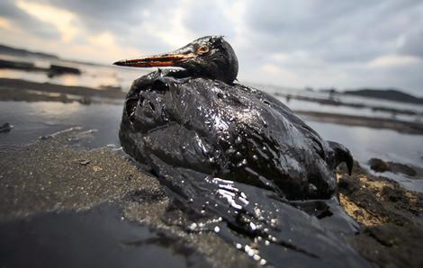 Washed-Up Birds in England