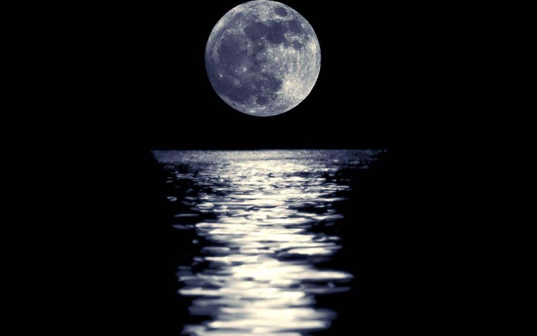Noctiluca Night
