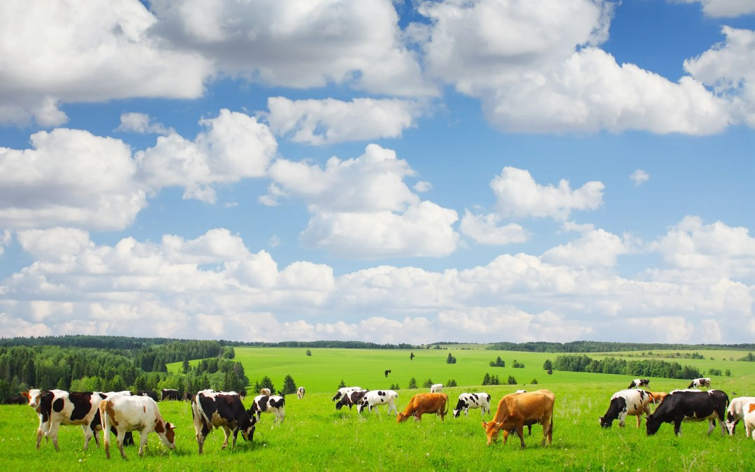 How Cows Save Soil