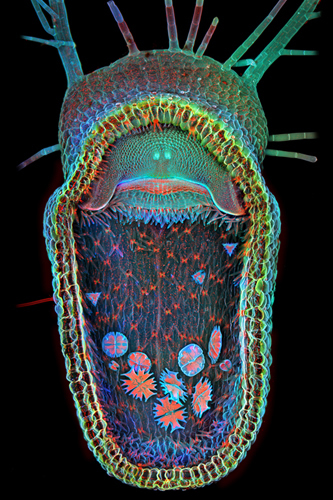 Art and Science Collide in the Olympus BioScapes Competition, for a Wondrous Effect