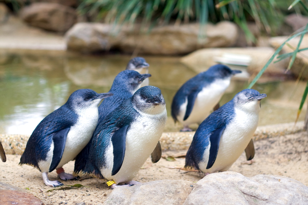 "Penguin Foundation Is ""Overwhelmed"" With Little Penguin Sweaters"