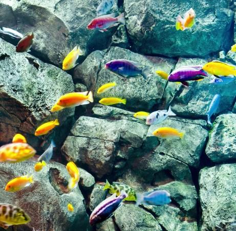 freshwater-fish