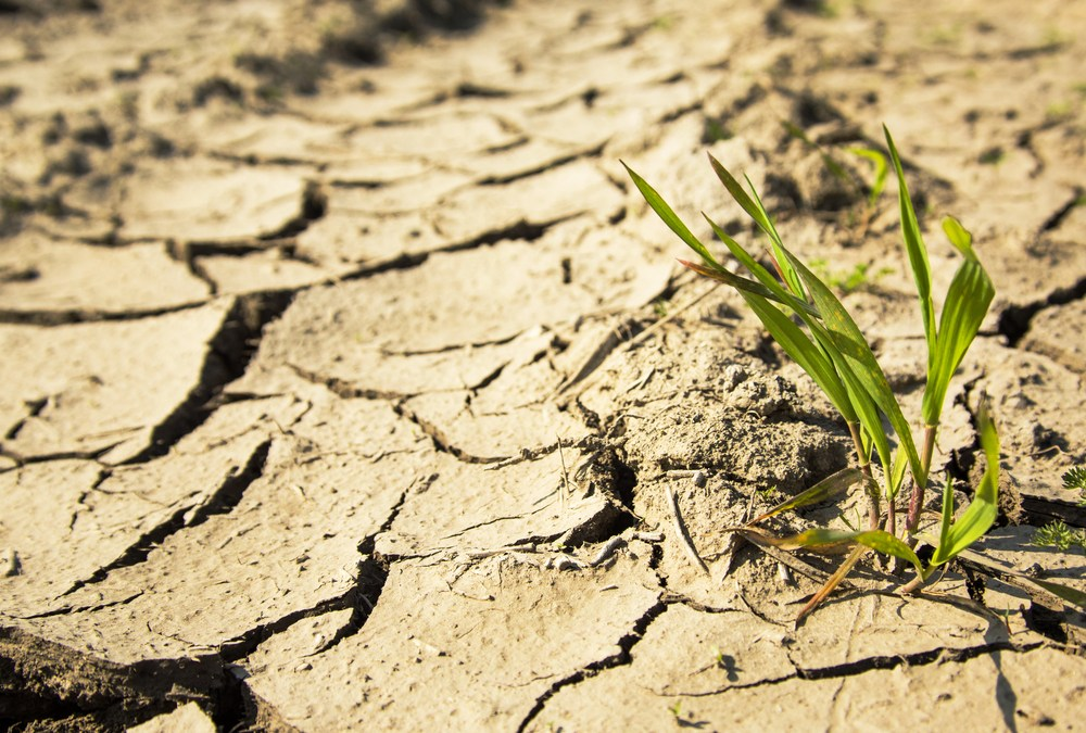 Droughts Reduce Tree Growth for 2 to 4 Years