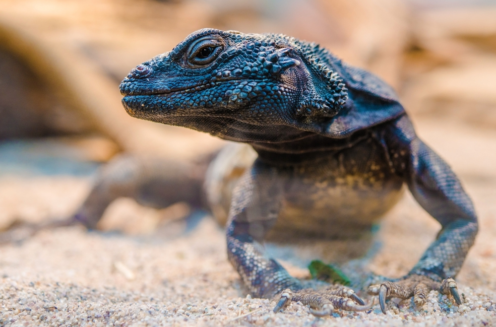 Swedish Lizards Benefit from Global Warming