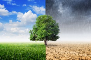 illustration of climate change concept: blue skies and green grass on one side, dark skies and arid land on the other