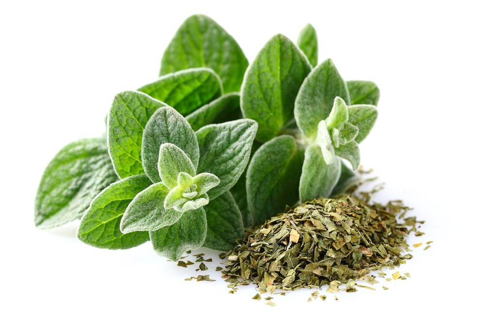 Oregano Could Help Reduce Methane Emissions