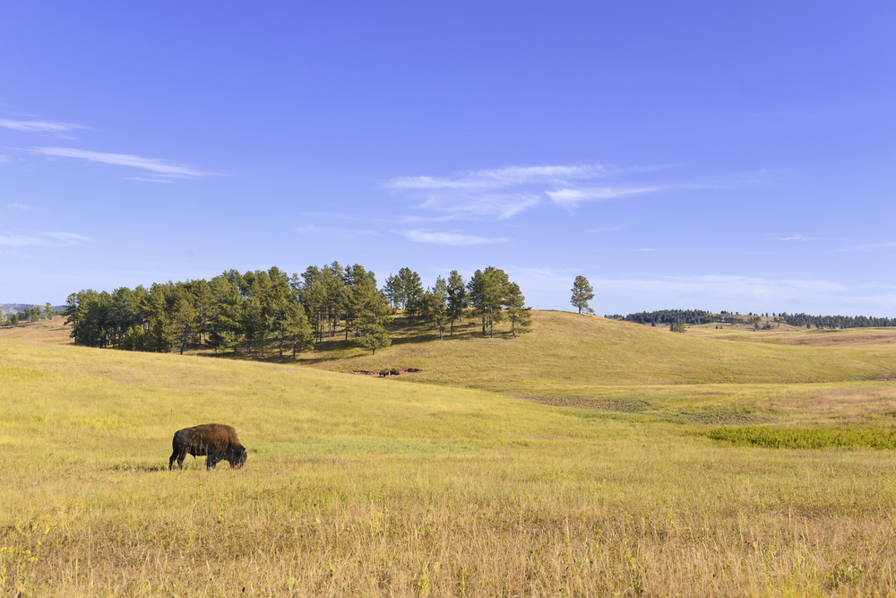 Harsher Summers, but Earlier Springs in North American Grasslands