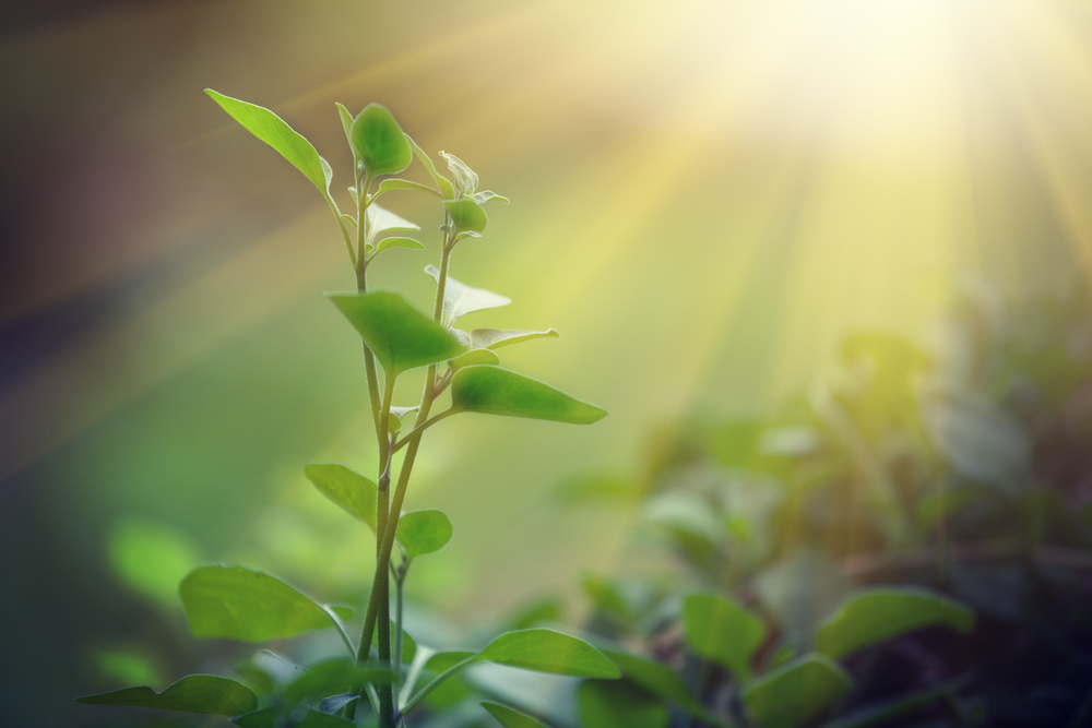 Further Steps Toward Artificial Photosynthesis