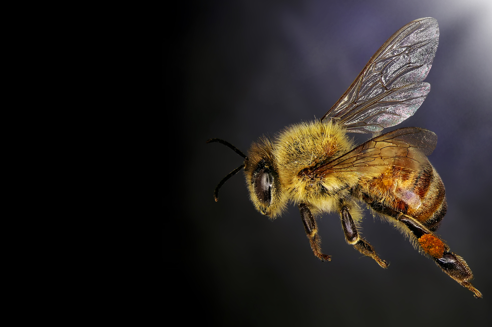 Bees Collect Most Pollen From Non-Crops, But Still Get Those Pesticides