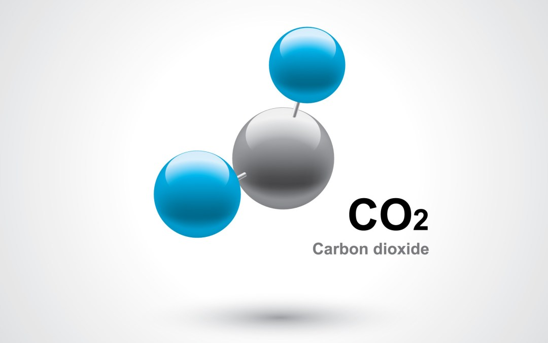 Learning About Carbon Storage From Nature