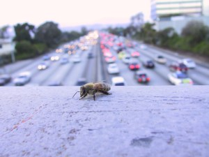 A city bee overlooks a Los Angeles freeway