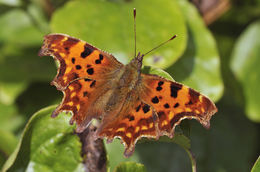 Butterflies Are Showing the Impact of Climate Change