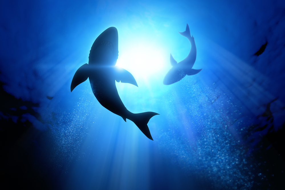 Sharks Need Conservation to Help Combat Climate Change