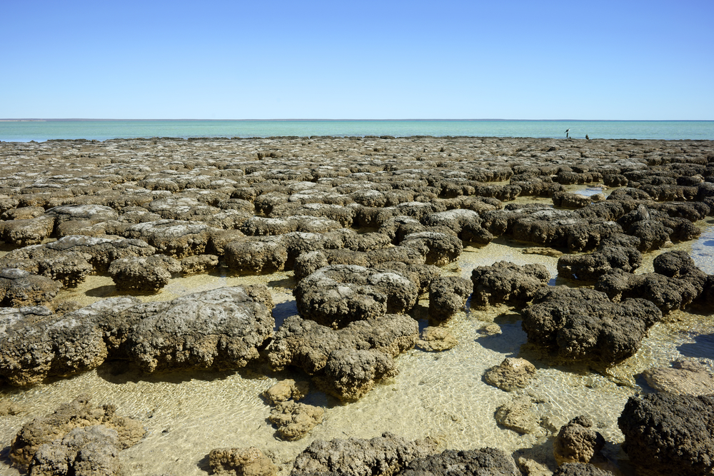 Scientists Use Big Data to Study the Decline of Stromatolites