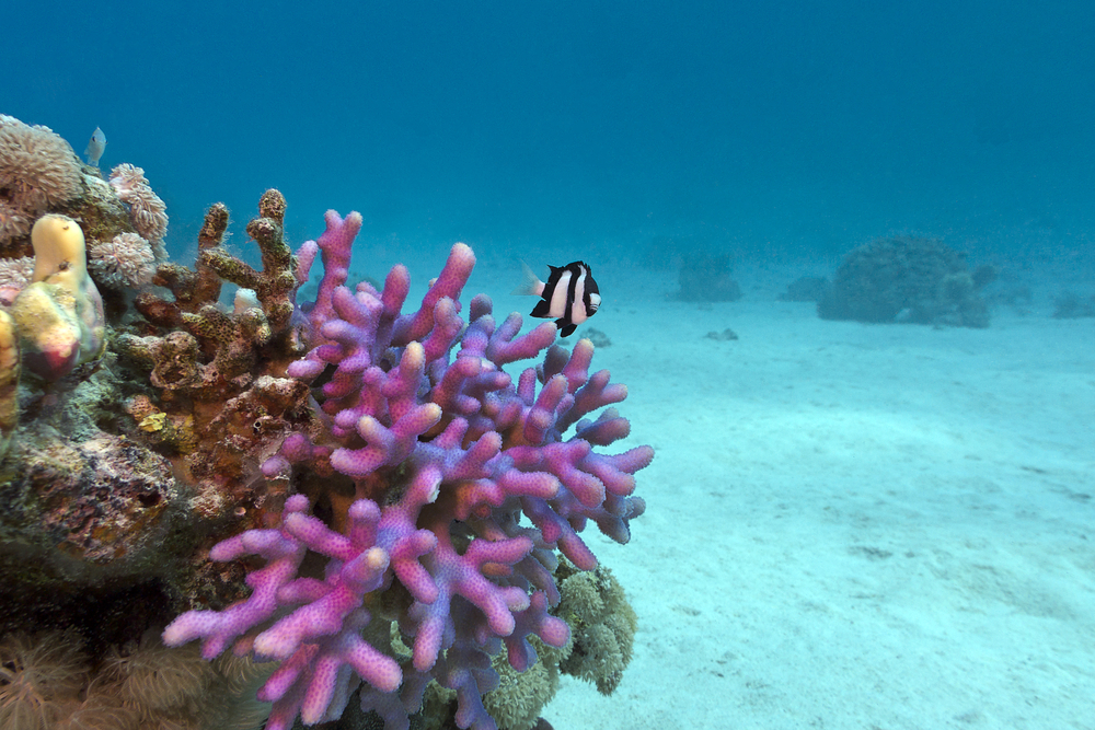 Coral Skeletons May Be Able To Resist Acidifying Oceans