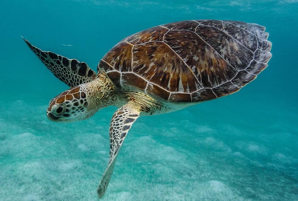 Hurricanes Have Taken a Devastating Toll on Sea Turtles