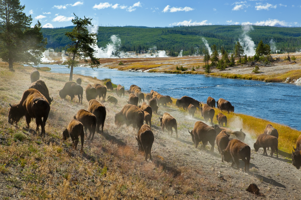 America's national parks are the face of climate change. Yellowstone National Park, for example, has seen new plant life and drastic decreases in snowfall. Photo: Shutterstock