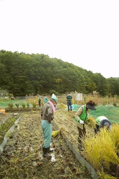 Resurrection of Fukushima Volunteers using Dr. Mizoguchi's method to rehabilitate small farms