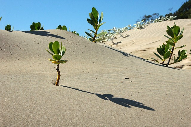 sand with plants poking out and a blue sky in the background
