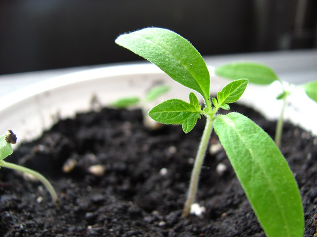 seedling in a cup