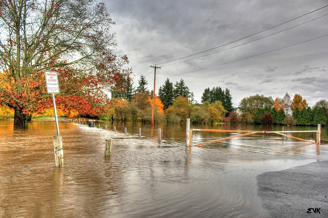 Trees and a street covered in a pool of water