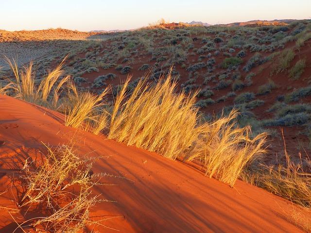 Orange sand with bush grass everywhere