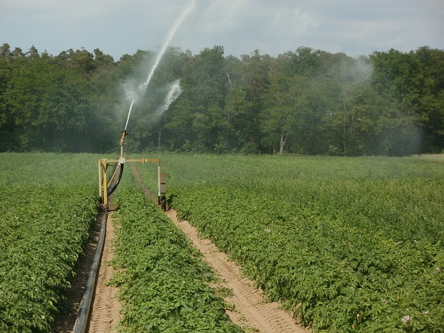 Field plantation with a sprinkler in the middle of it