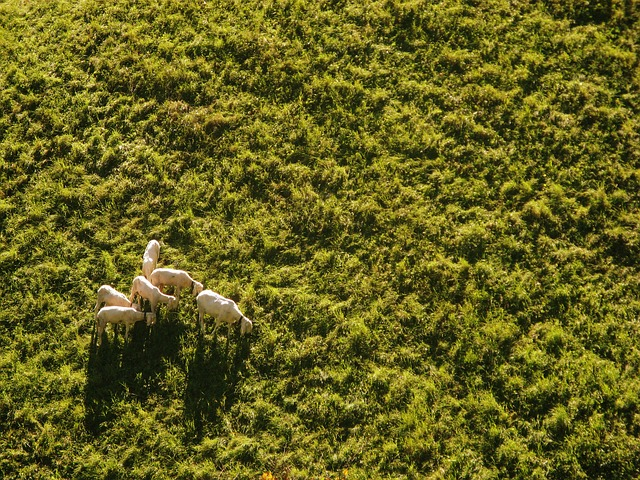 Tradeoff in a green field, aerial view