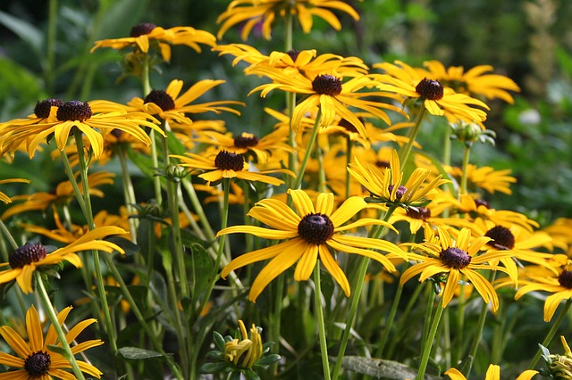 Picture of yellow flowers
