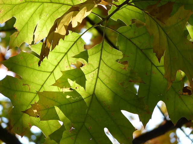 Image of green leafs with sunlight streaming through them