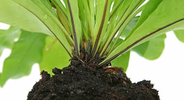 Plant base with soil on the roots