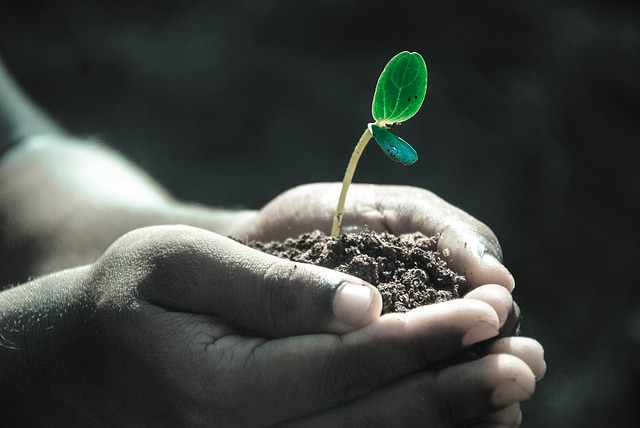 Researcher holding a sprouting seedling in their hands
