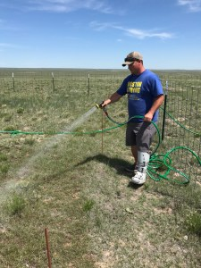 Image of a scientist watering a field plot