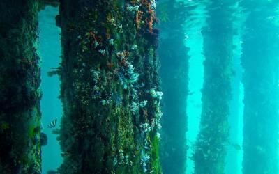 Sydney Environment Institute Lecture: An Encrusting Ocean