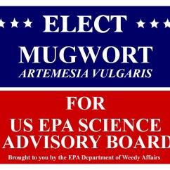 Mugwort Election Poster-01