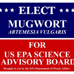 Mugwort Election Poster-01