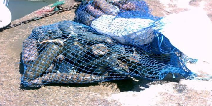 « Ports bleus » : Nettoyage des 33 ports d'Algérie