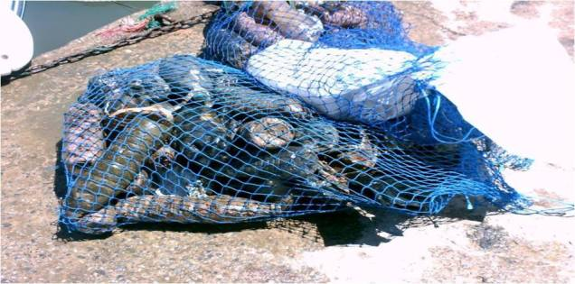 Nettoyage des fonds marins (3)