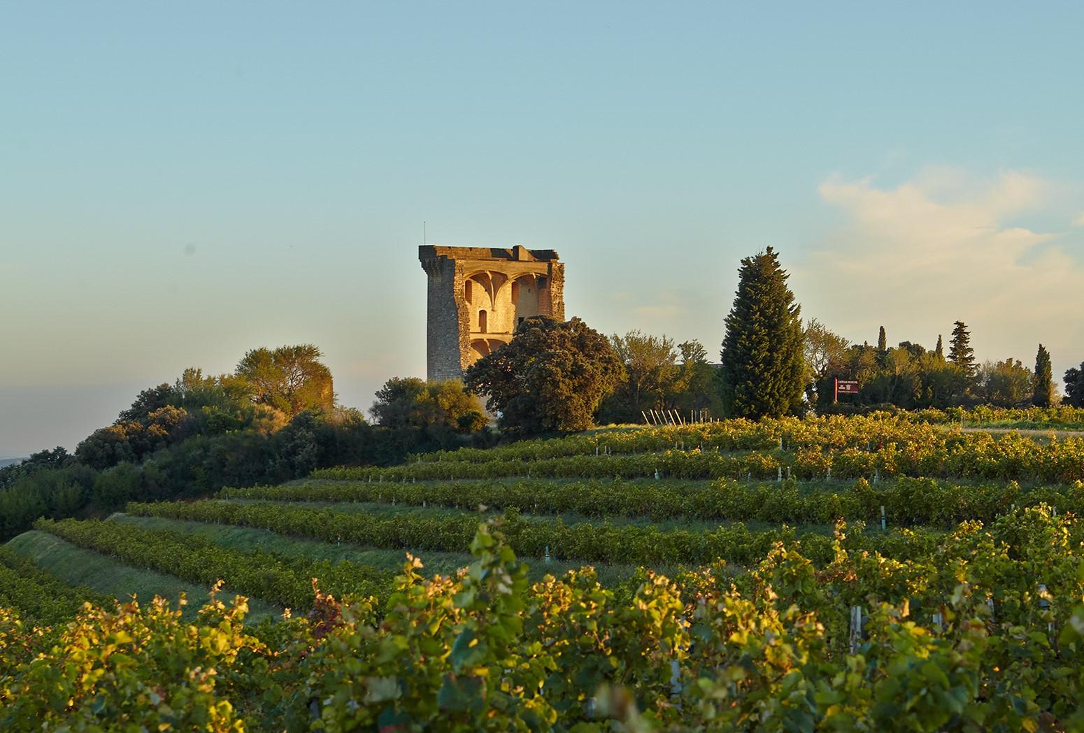 Climat : les nouveaux vins arrivent en Auvergne-Rhône-Alpes
