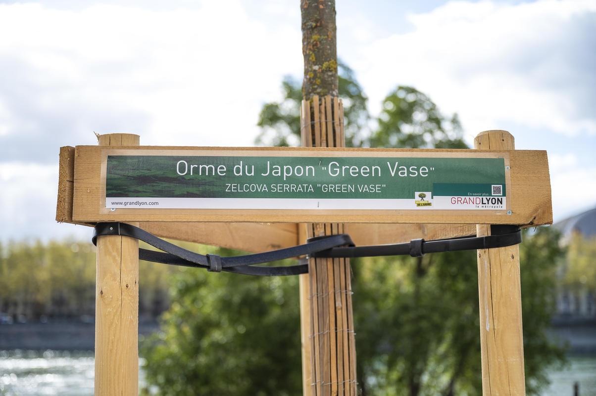 A Lyon, des arbres adaptés au changement climatique sur un quai du Rhône