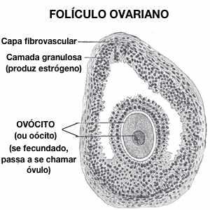 Folículo ovariano