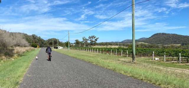 Enzo and the Silverback cycling past grape vines